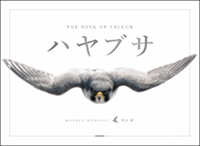 THE WING OF FALCON - ハヤブサ